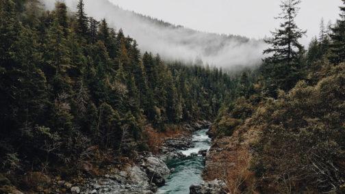 ambiance survie en foret et montagne